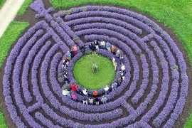 labirint2