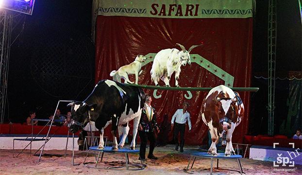 cirkus safari1