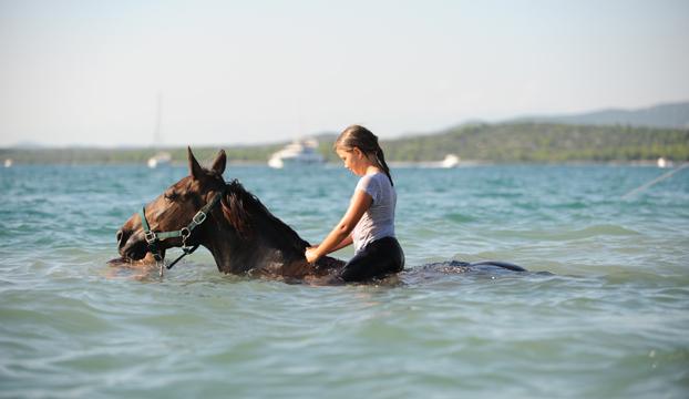 konji murter4