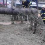 U županiji vatrogasci pola dana uklanjali stabla s prometnica i javnih površina, te otkinute dijelove krovova