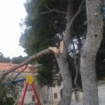 Upozorenje roditeljima zbog srušenog bora na dječje igralište u Tisnom