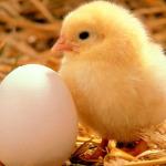 Kada vidite ovaj način guljenja kuhanog jajeta, više ih nećete guliti drugačije