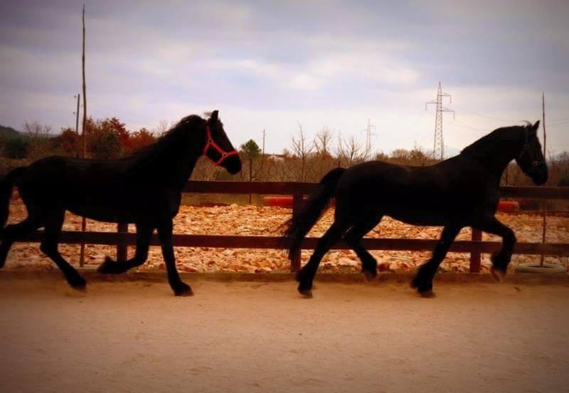 konj4