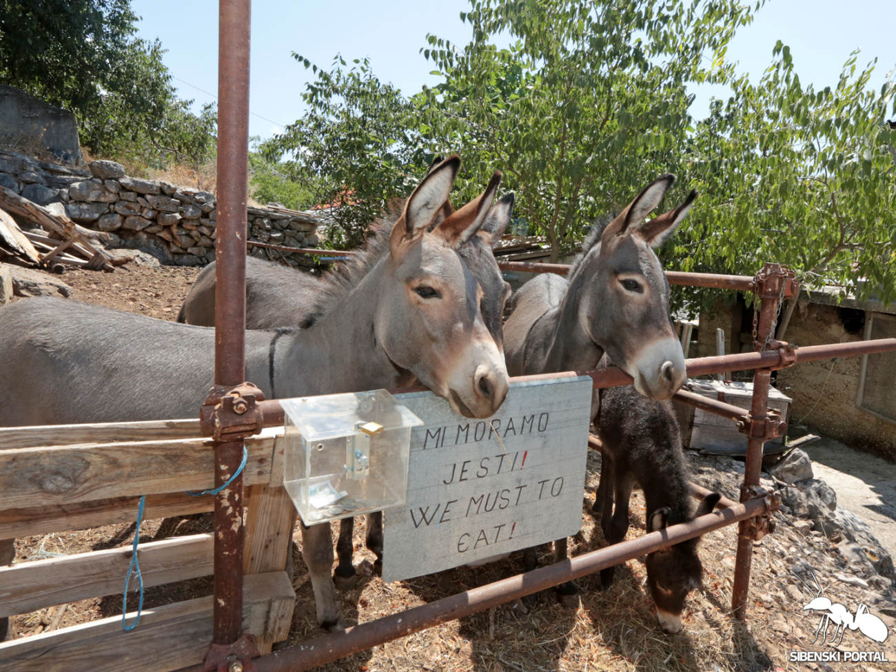 svježa magarca magarca