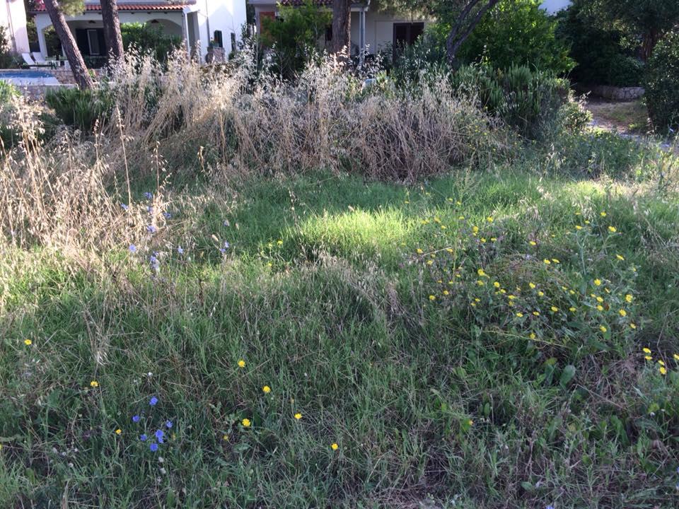 trava jadrija4