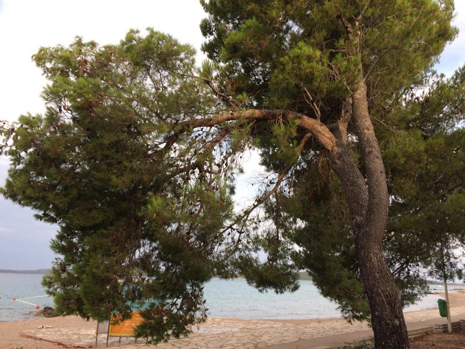 stablo jadrija2