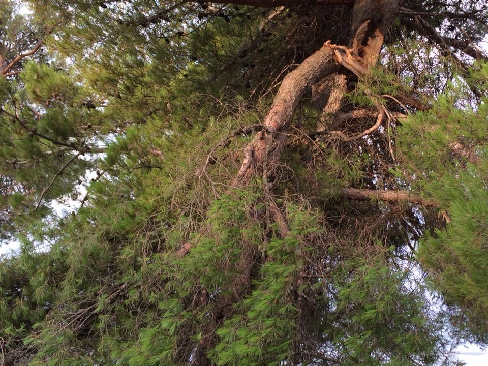 stablo jadrija4