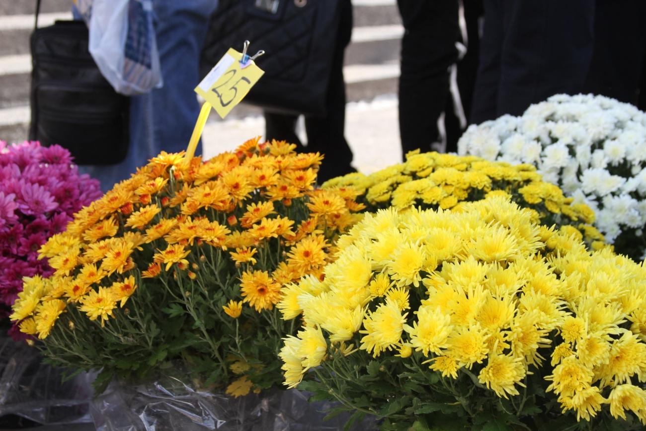 cvijece svi sveti 2