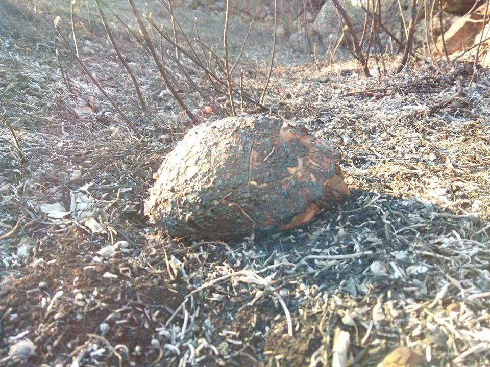 kornjaca pozar dubrava